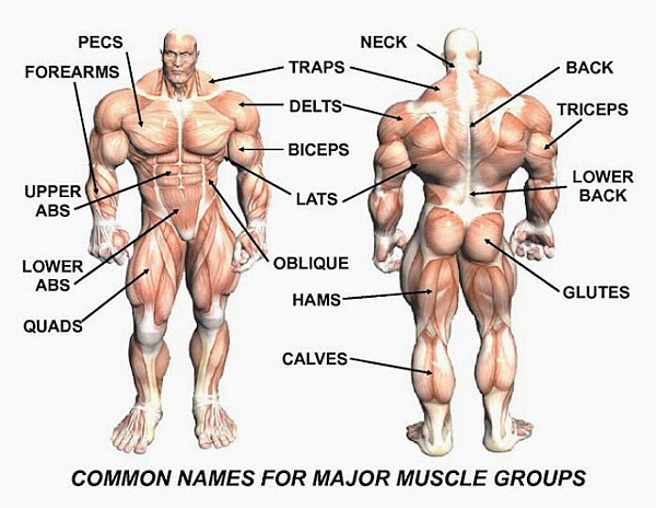 How Often Should You Work Out A Muscle Group 65