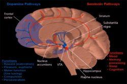 12 Ways To Raise Serotonin Levels