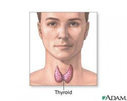 Natural Thyroid Storm Treatments