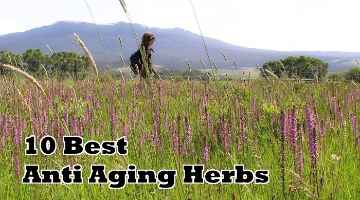 Ten Of The Best Anti Aging Herbs