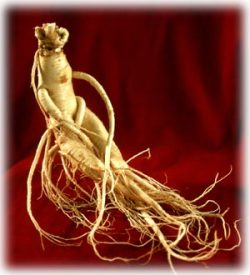 Ginseng for Gout