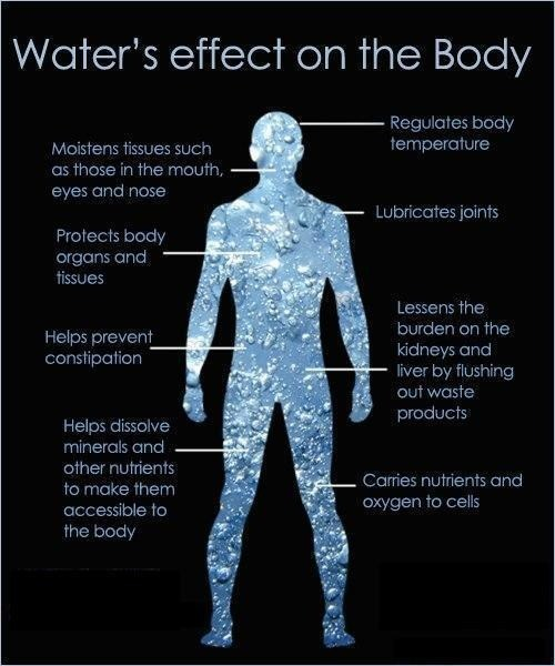 waters affect on the body