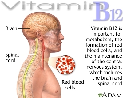 B12 Vitamins and your body