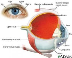 Lutein for Better Eye Health