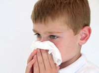 Survey Says Echinacea No Help for Colds