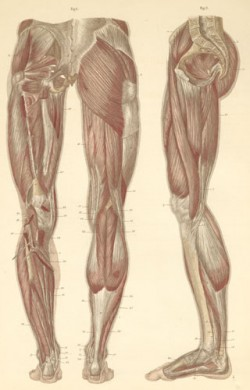 Putting Definition in Your Leg Muscles