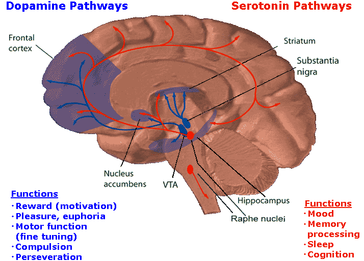 Is Increase Of Serotonin The Single Best Way To Increase Happiness?