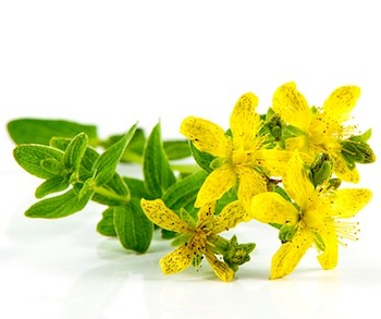 St Johns Wort as Herbs for anxiety