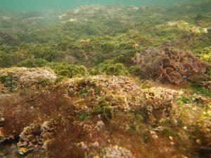 Algae To Fight Acne