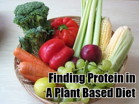 finding protein in a plant based diet