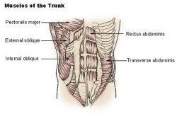 5 Signs of Weak Core Muscles